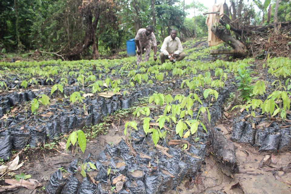 OONI UNVEILS ONE MILLION COCOA TREES NURSERY FOR YOUTH EMPOWERMENT