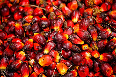 APC COMMENDS FG's 'NO WAIVERS POLICY' ON IMPORTATION OF PALM OIL, AGRIC PRODUCE