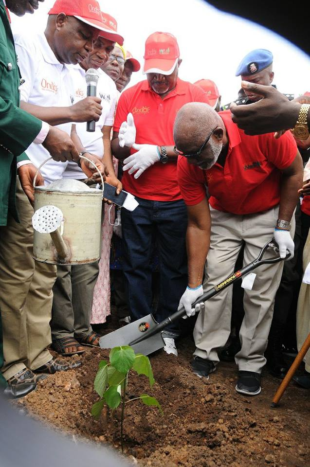 Akeredolu flags off afforestation project … seeks to make Ondo hub of quality wood production in Nigeria