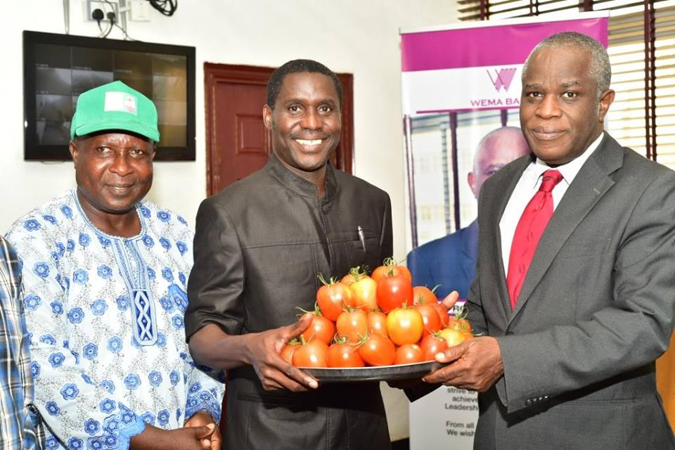 FUTA introduces new variety of tomatoes